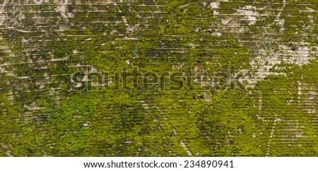 Worn and weathered moss covered board for use as a texture - stock photo
