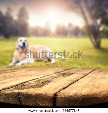 worn table and dog on grass  - stock photo