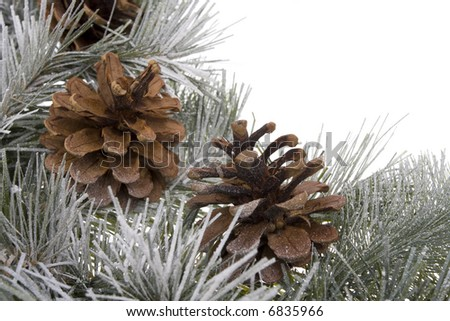 Wreath branch with pinecones isolated on white - stock photo