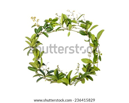 wreath of creeper flower isolated on white background, alphabet floral - stock photo