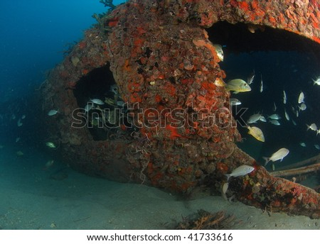 wreck dive and reef fish - stock photo