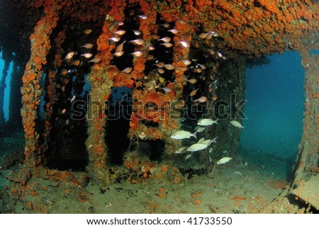wreck dive south Florida - stock photo