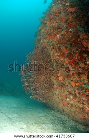 wreck diving and reef - stock photo