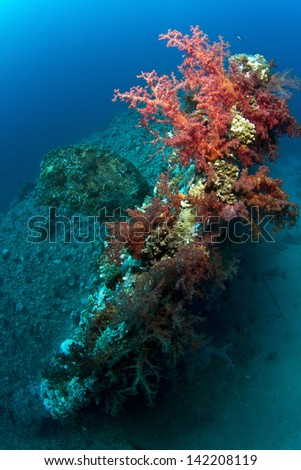 Wreck of Dunraven in Red Sea, South Sinai, Sharm El Sheikh area, Egypt in Ras Mohamed National Park.  Stern covered in soft coral with the propeller and rest of the wreck in the background. - stock photo