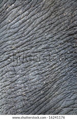 Wrinkled elephant skin (Asian elephant) - stock photo