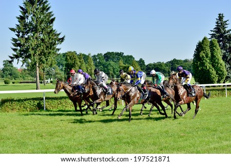 WROCLAW, POLAND - JUNI 8: Horse race for the prize of the President of the City of Wroclaw on Juni 8, 2014. Race wins horse Silvaner with the number 7, son of the legendary horse Lomitas. - stock photo