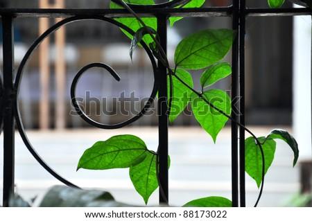 Wrought iron garden fencing - stock photo