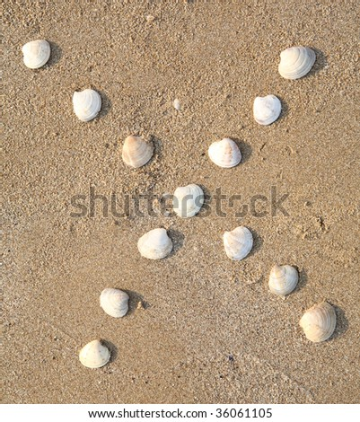 x letter symbol created from shells on a beach sand