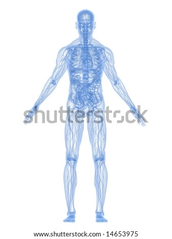 x-ray anatomy - stock photo