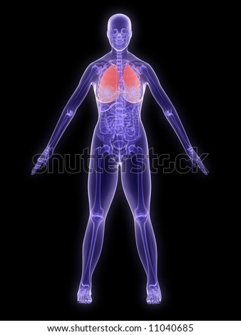 x-ray anatomy - lung - stock photo