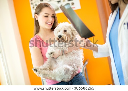 X ray examination of sick Maltese dog in vet clinic - stock photo