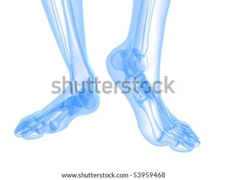 x-ray foot illustration - stock photo