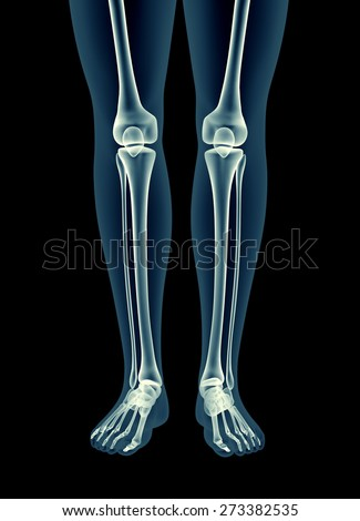 full human skeleton xray stock images, royalty-free images, Skeleton