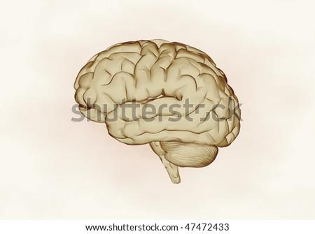 X- ray human brain - stock photo