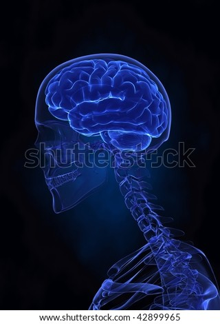 X- ray human brain left view - stock photo