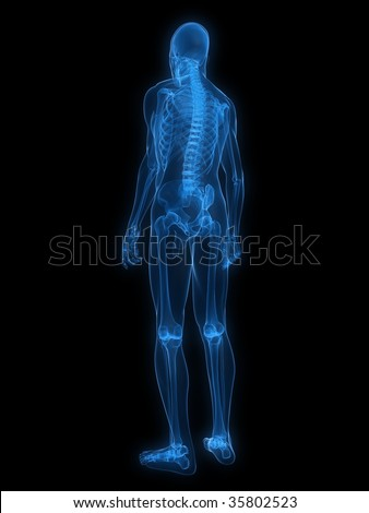 xray skeleton stock images, royalty-free images & vectors, Skeleton