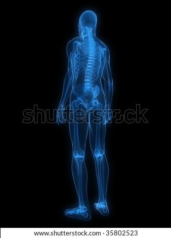 x-ray - human skeleton - stock photo