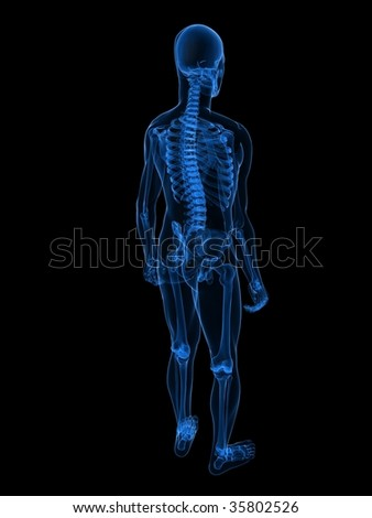 human skeleton xray stock images, royalty-free images & vectors, Skeleton