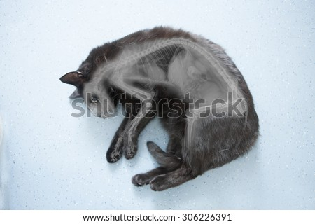 X-ray of a cat - stock photo