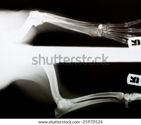 x-ray of a dog's leg - stock photo
