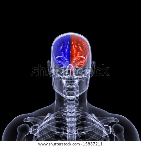 X-Ray of a male skeleton with his brain displayed with each side displayed in a different color. Isolated on a black background - stock photo