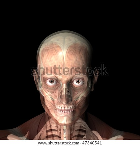 X-Ray of a male skeleton with his muscles and brain displayed.  Isolated on a black background - stock photo