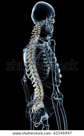 X-ray of a skeleton from the side with the spinal column rendered as bone to make it stand out. - stock photo