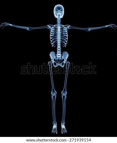 Xray Skeleton Xray Skeleton On Black...