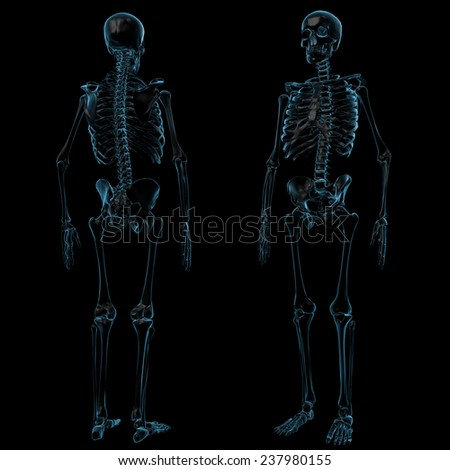 X-Ray Skeleton with Front and Back View - stock photo