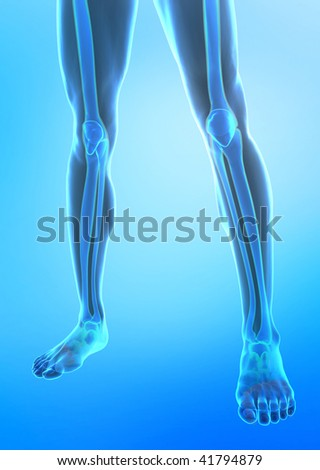 X-ray view of human legs - stock photo