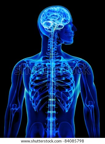 X-ray with brain and spinal cord concept,Part of a medical series - stock photo