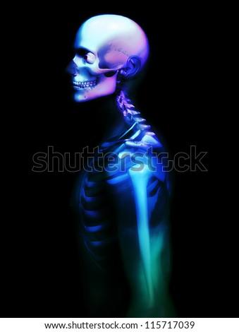 X rayed skeleton - stock photo
