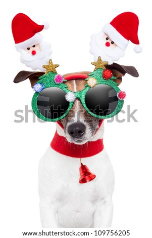 xmas dog with funny sunglasses - stock photo