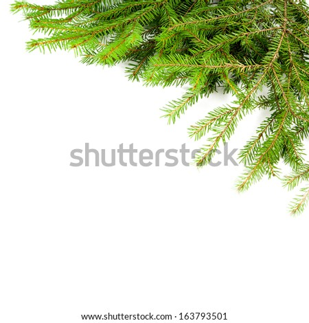 Xmas tree branch on a white background - stock photo