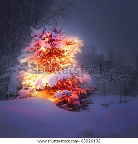 xmas winter pine tree - stock photo