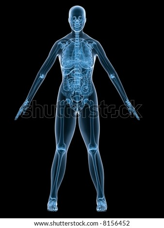 xray anatomy - stock photo