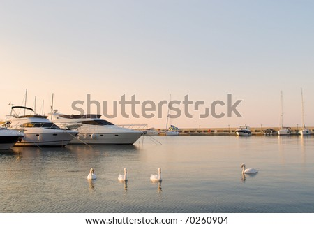 Yachts and white swans in the silent bay - stock photo