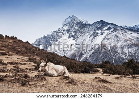 Yak and mountains on background, Everest region, Himalaya - stock photo
