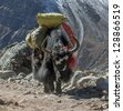 Yak caravan near Dusa village - Everest region, Nepal, Himalayas - stock photo