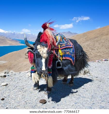 Yak with lake background - stock photo