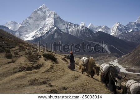 Yaks go on a river Gimalajchkoj valley. Against beautiful mountain Amadablam - stock photo
