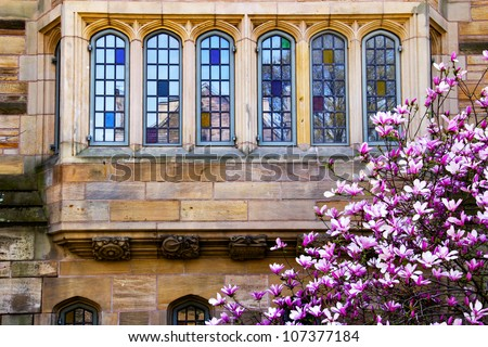 Yale University Victorian Windows Reflection, Magnolia, Spring, New Haven Connecticut