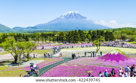 Yamanashi, Japan - May 12, 2016 : The Fuji with the field of pink moss at Shibazakura festival, Yamanashi, Japan