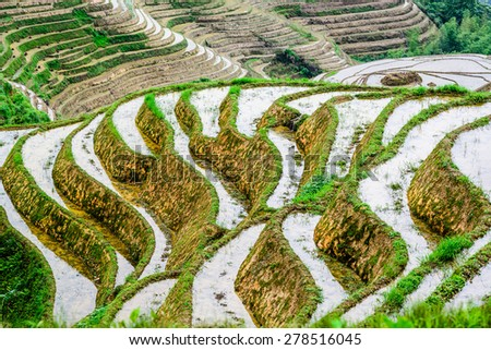 Yaoshan Mountain, Guilin, China hillside rice terraces landscape. - stock photo