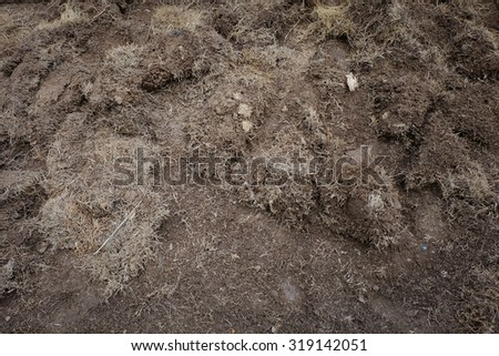 yard work, preparation soil in garden with dry grass - stock photo