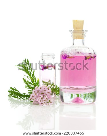 Yarrow herbal tincture, with fresh flowers Achillea millefolium. - stock photo