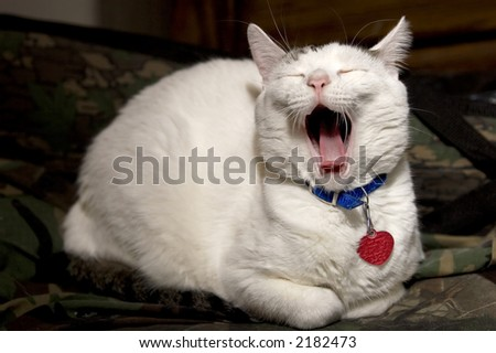 Yawning Cat - stock photo