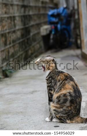 Yawning cat in street - stock photo