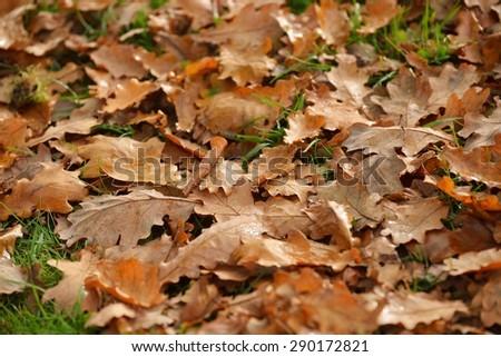 yeallow Autumn leaves on the ground - stock photo