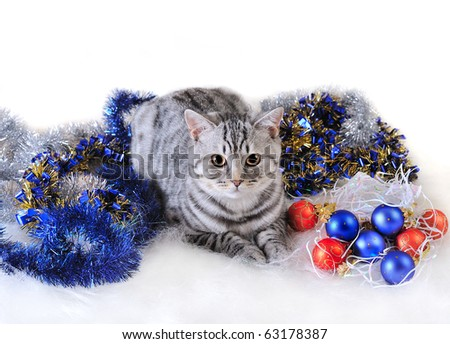 Year of a cat - stock photo